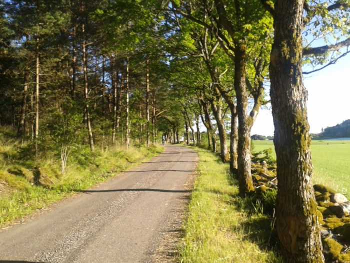 Forêt Larkollen