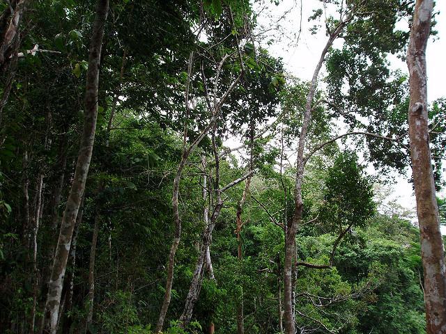 Dans la jungle du Darien