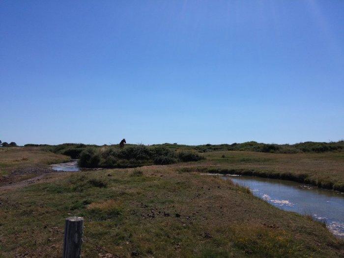 Le marais du Pays de Retz