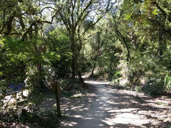Piste cyclable dans la forêt vendéenne