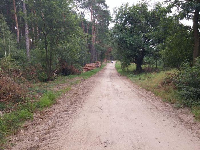 Sentier dans la forêt en Pologne