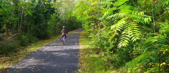 Vélodyssée - piste cyclable forêt