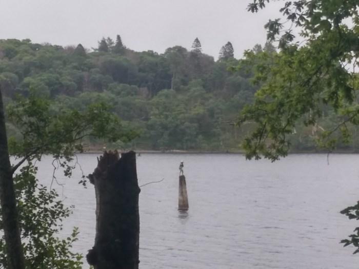 zoom wee peter statue loch lomond