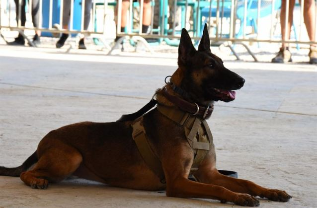 Veterans day images Free 2020 Canine