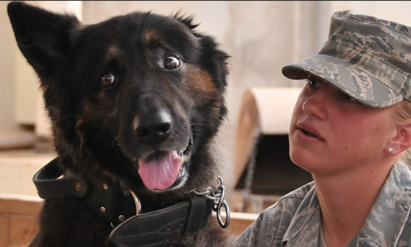 Veterans day k9 dogs images 2020