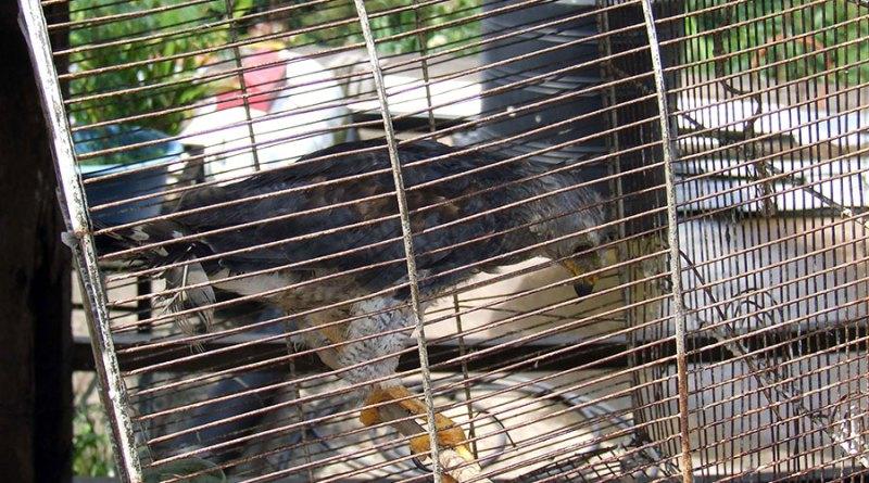 Venta de animales exóticos por internet genera ingreso de 2 mdp anuales