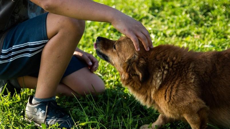 personalidad del perro