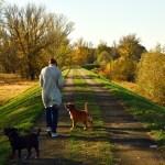 agresividad del perro a las personas