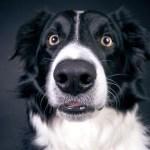 inteligencia de los perros