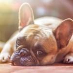 enfermedades respiratorias en el perro