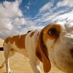 cosas que pueden matar a tu perro