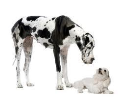 la llegada de otro perro a casa