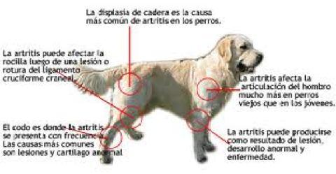 enfermedades ams frecuentes musculares y articulares linear unit animales