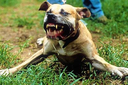 perros peligrosos