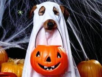 disfraz de halloween para perro