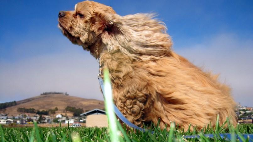 calcular la edad humana canina