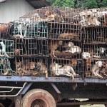 tráfico ilegal de cachorros