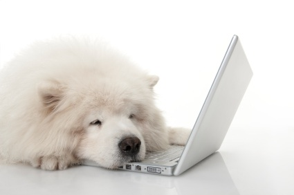 perro por Skype