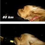 cara de velocidad de un perro