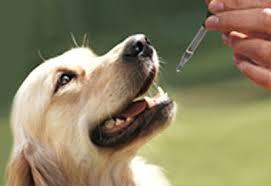 homeopatía para perros