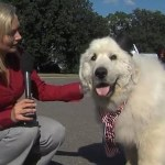 duke, el perro alcalde