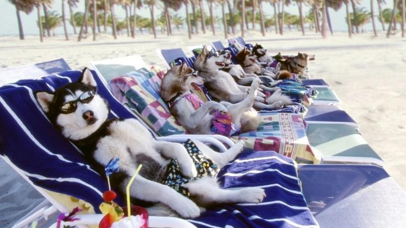 perros y playas