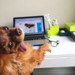 perro en el trabajo