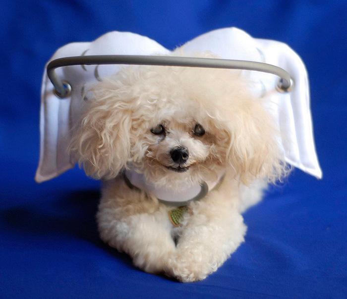 sistema antigolpes para perros ciegos