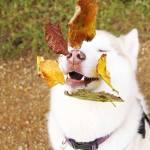 origen de la raza de tu perro