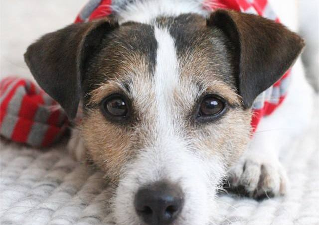 los posts más leídos de encantador de perros