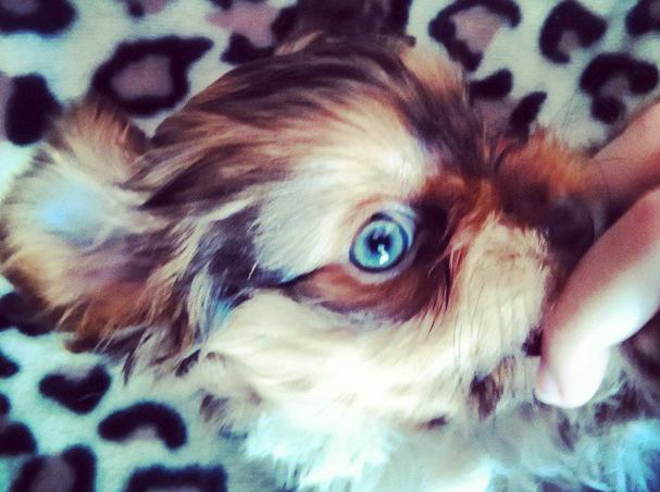 perros de instagram