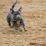 ejercicio físico para perros