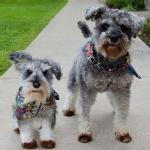 réplicas de perros de peluche