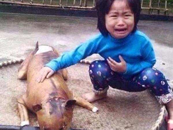 perro desaparecido aparece en mercadillo como carne