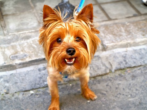 razas de perros que más y menos ladran