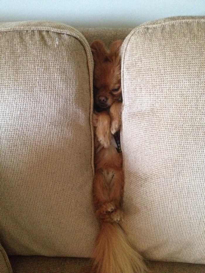 perros dormidos