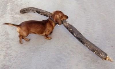 perros y palos