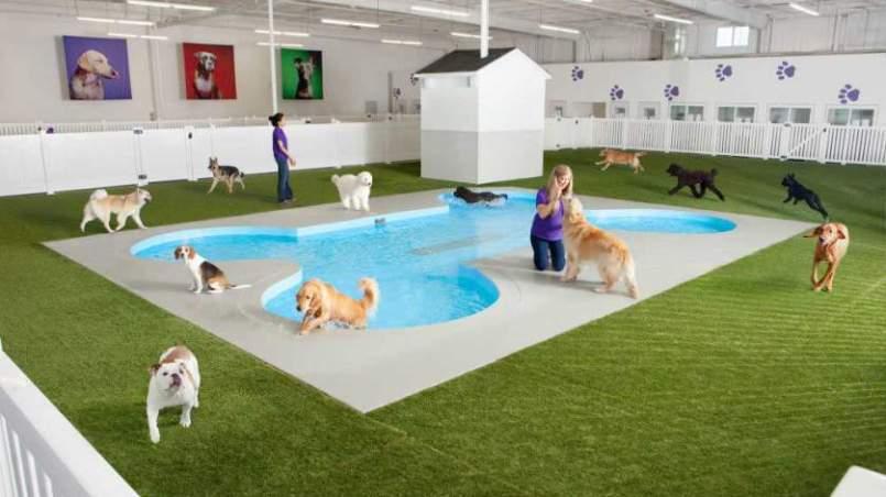aeropuerto para perros