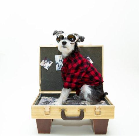 cama para perro de maleta