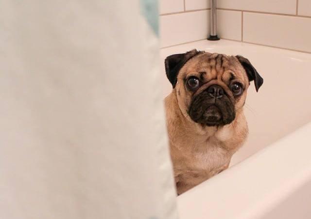 con qué frecuencia debemos bañar a un perro