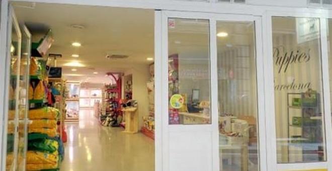 cierran tienda de mascotas por maltrato animal