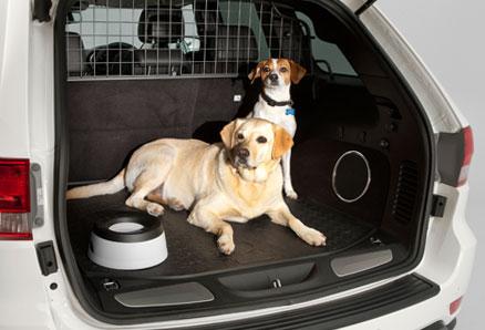 cómo viajar con perros en coche