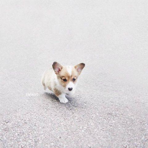 perros solos perros robados