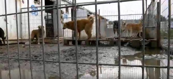 perros en refugio