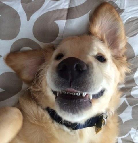 perro con corrector dental