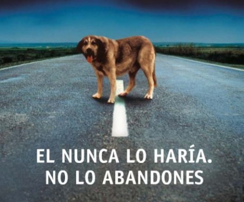 leyes de abandono animal