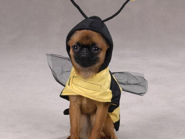 miel para perros