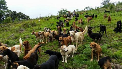 santuario de perros