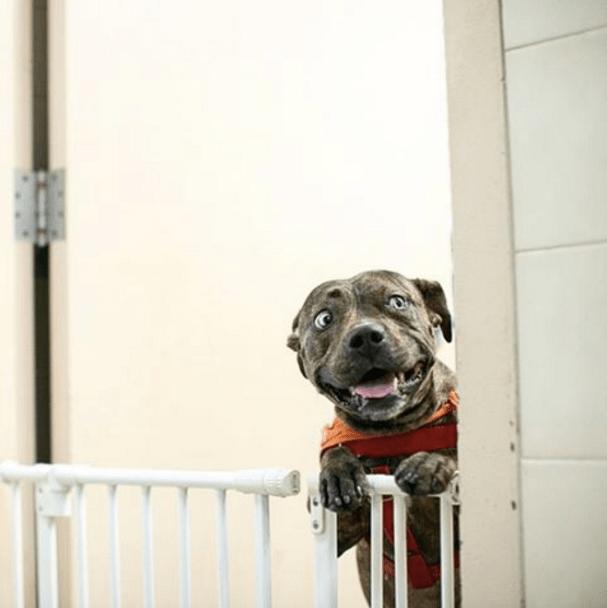 5 cosas que no debes hacer nunca a tu perro