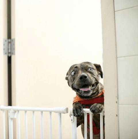 lo que nunca deberías hacer con tu perro